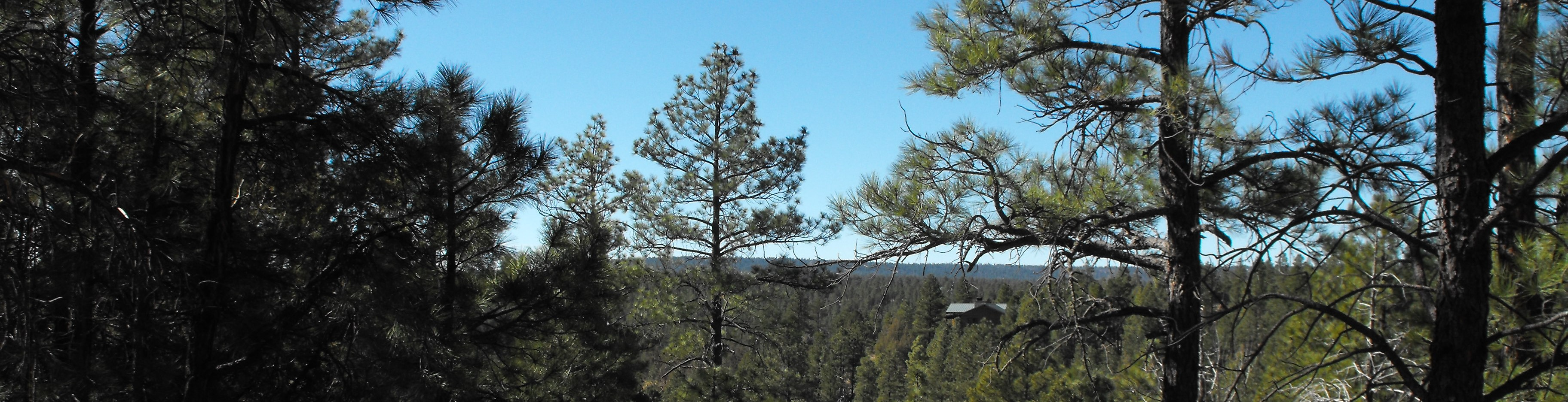 Land in the Ponderosa Pines